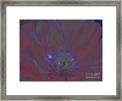 A Flower For Alphonse Framed Print