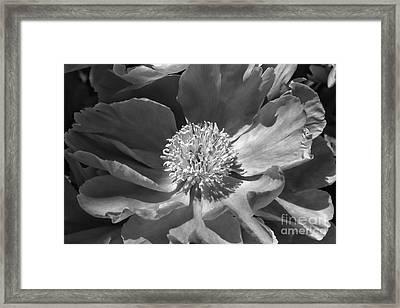 A Flower Of The Heart Framed Print