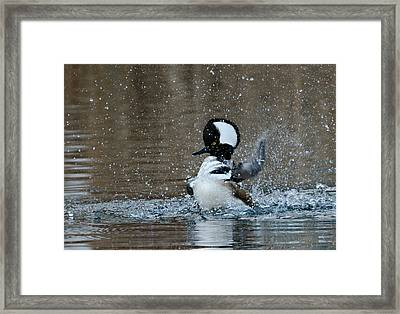 Framed Print featuring the photograph A Flurry Of Feathers by Fraida Gutovich