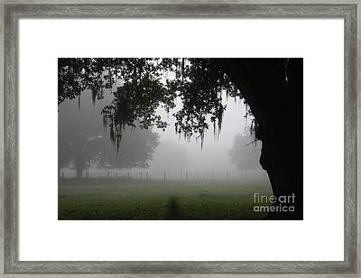 A Foggy Day In Rural Fl Framed Print by Marilyn Carlyle Greiner