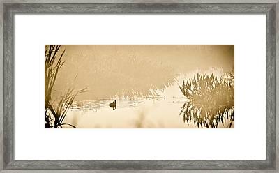 A Foggy Morning Swim Framed Print