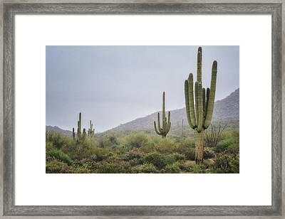 A Foggy Sonoran Day  Framed Print