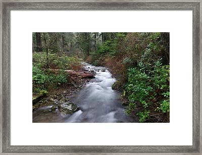 A Forest Stream Framed Print by Jeff Swan