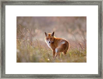 A Fox Called Pinoccio Framed Print