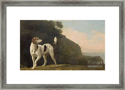A Foxhound Framed Print