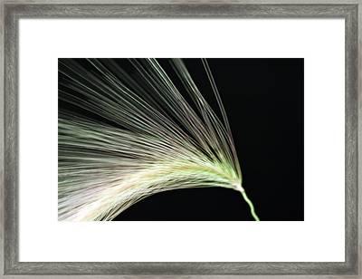A Foxtail Seed In Flight - Macro Framed Print by Sandra Foster