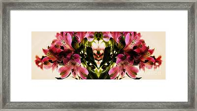 A Freesia Reflection Framed Print