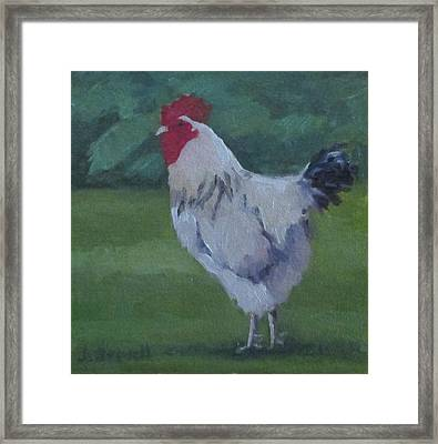 A French Rooster Framed Print by Jennifer Boswell