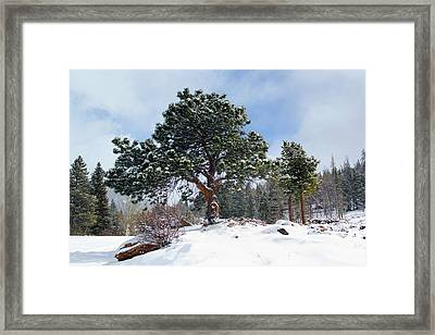 Framed Print featuring the photograph A Fresh Blanket Of Snow by Shane Bechler