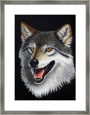 A Friendly Wolf Framed Print by Lorraine Foster