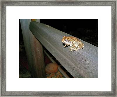 A Frog Went A Courting Framed Print by Randy Rosenberger