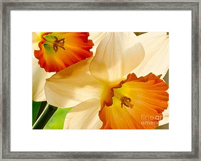 A Full Frame Of Daffy's Framed Print