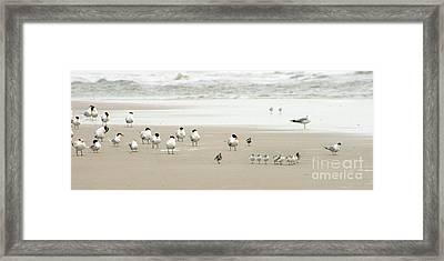 A Gaggle Of Seabirds Framed Print