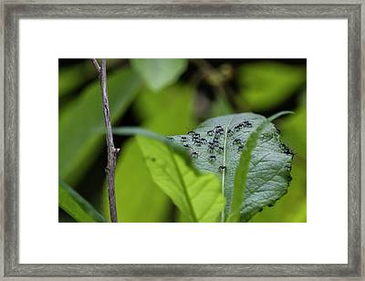 A Gathering Of Ants Framed Print