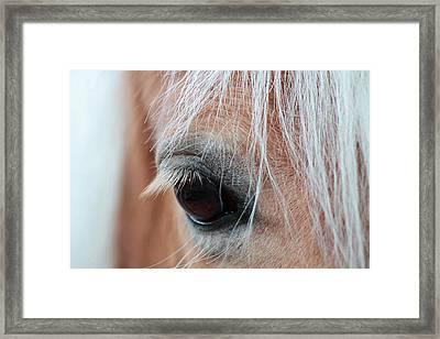 A Gentle Soul Framed Print by Linda Crockett