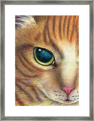 A Ginger Cat Face Framed Print