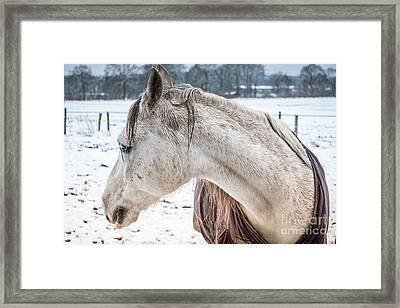 A Girlfriend Of The Horse Amigo Framed Print