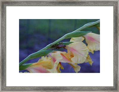 A Glad Hopper 3 Framed Print by Debbie May