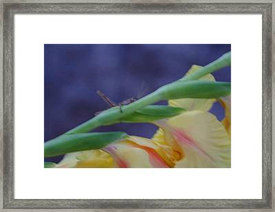 A Glad Hopper Framed Print by Debbie May