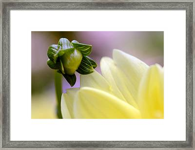 A Look Into  Adulthood Framed Print