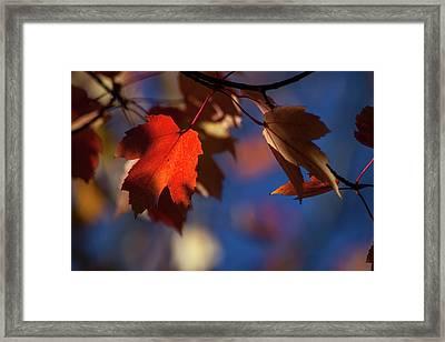 A Glimpse Of Autumn Framed Print
