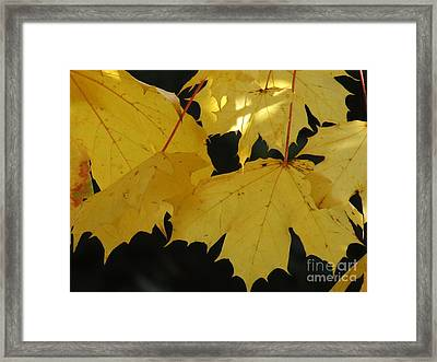 A Glimpse Of Light Framed Print