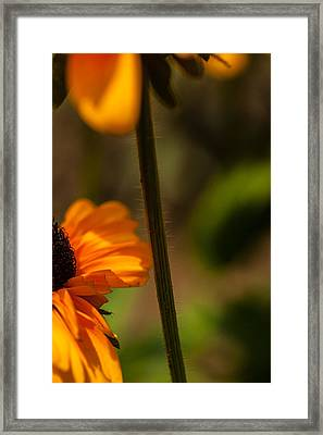 A Glimpse Of Susie Framed Print