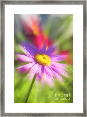 A Glorious Summer Framed Print