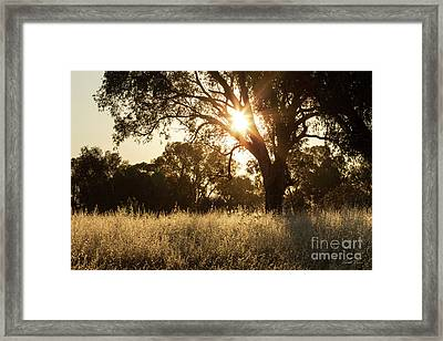Framed Print featuring the photograph A Golden Afternoon by Linda Lees