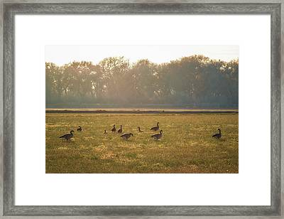 A Golden Dream Of Geese Framed Print by Mary Lee Dereske