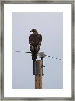 A Golden Eagle Sits On Top Of A Power Framed Print
