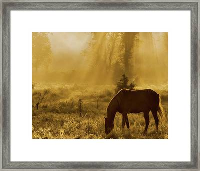 A Golden Moment Framed Print by Ron  McGinnis