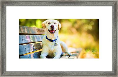 A Good Day On The Bench Framed Print