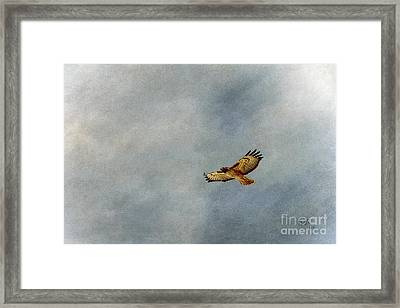 A Good Day To Fly Framed Print by Krista-