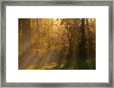 A Good Morning From Above Framed Print by Karol Livote