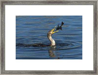 A Good Toss Framed Print by Fraida Gutovich