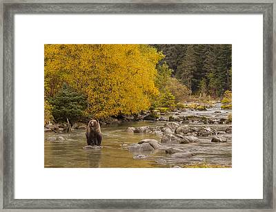A Gorgeous Day For Fishing Framed Print