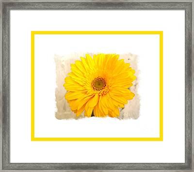 A Grand Yellow Gerber Framed Print by Marsha Heiken