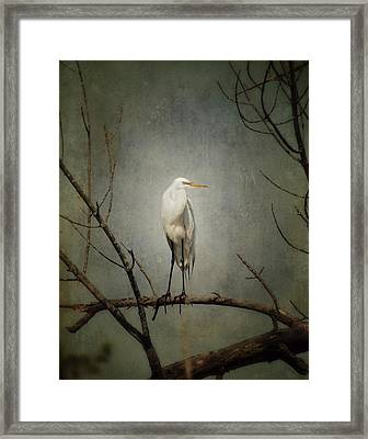 A Great Egret Framed Print