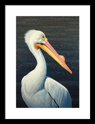 Pelican Framed Prints