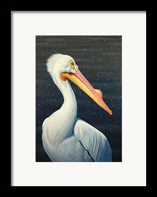 Seabird Framed Prints