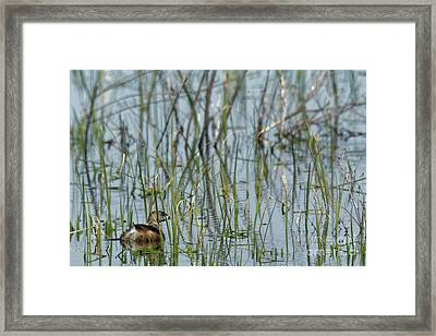 A Grebe In The Folliage Framed Print by Natural Focal Point Photography