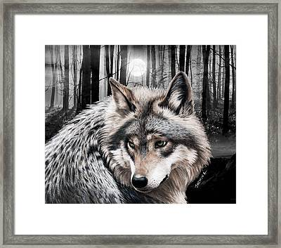 A Grey Wolf  Framed Print by Jasmina Susak