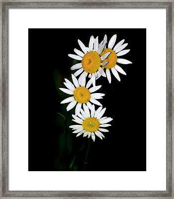 Framed Print featuring the digital art A Group Of Wild Daisies by Chris Flees