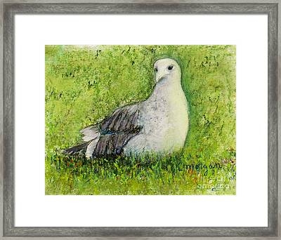 A Gull On The Grass Framed Print