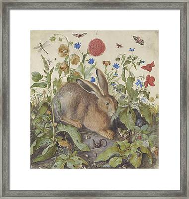 A Hare Among Plants Framed Print