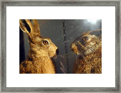 A Harey Place To Be Framed Print by Jez C Self