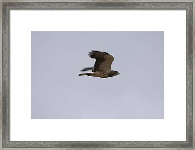 A Hawk Near The Charles M. Russell Framed Print