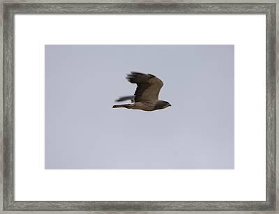 A Hawk Near The Charles M. Russell Framed Print by Joel Sartore
