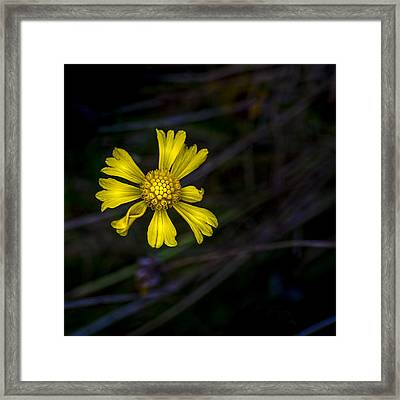 A Heart Of Gold Framed Print